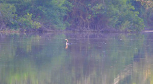 spanish-creek-belize-photo-13