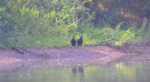 spanish-creek-belize-photo-9